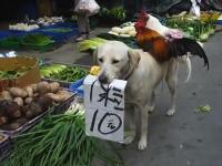 中国ではワンコとニワトリが市場で野菜を販売している。中華の珍百景??