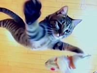 垂直跳びが得意なニャー助(猫)にどこまで飛べるのか挑戦させてみた。