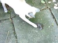 ちょっかいを出そうとしたカエルが幼女の叫び声をあげて猫驚嘆w