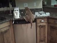 これはかわいそう(´・_・`)ネコホイホイに掛かった猫がパニックになってしまう。