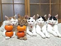 手の上に順番に柿を乗せられるのをじっと待つ猫たち。今日のほのぼの動画