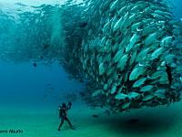 まるで水中の竜巻のように海底から伸びるお魚さんの渦。カボパルモ国立公園