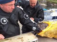 豪快に食われてるwwwグロテスクな魚に左手をパックリいかれた漁師さん。