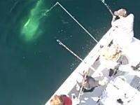 アメリカで釣り人が417kgの巨大マグロを釣り上げる。その時のビデオが公開。