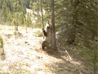 世にも恐ろしい熊を定点カメラで盗撮してたら可愛くて和んだ
