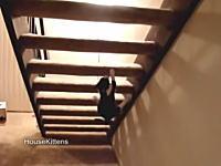 猫の運動神経。自宅の階段であえて難しい登り方をするニャンコのビデオ。