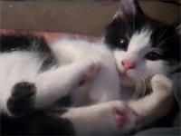 猫 『ちょ、蹴るなよー!やめろよー!』 それ自分の脚だよ(萌)