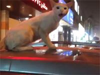 車の屋根でくつろいでいた猫を撮影したら怒られた