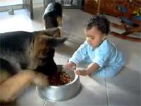 赤ちゃんと犬の命を賭けた戦い!「それは俺のもんだ」「いや、俺んだ」