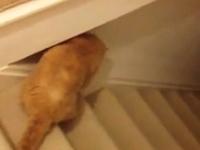 階段のスロープを利用した一人遊びを覚えたニャンコ。運動不足解消イイネ。