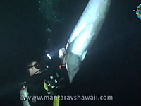 潜っていたダイバーに釣り糸が絡まったイルカが助けを求めにやってきた。