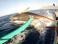ザトウクジラの不意打ち体当たりアタックを食らったカヌー。鯨ウォッチング。