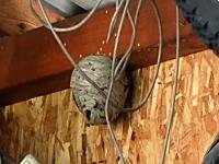 庭の物置小屋にできた大きな蜂の巣をエアガンで襲撃してみた動画。