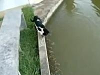 この猫SUGEEE!目にも止まらぬスピードで魚を捕らえるネコの狩り動画。