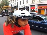 猫のメッセンジャーがGoPro公式に取り上げられててもやっぱりカワイイ車載