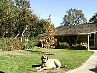 庭に植えた木が育つ様子を5年間に渡って毎週撮影し続けて作られた作品。