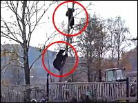 絶体絶命すぎる(((゚Д゚)))木の上に逃げる人、それを追って上る野生のクマ!
