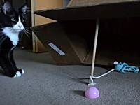 ニャンコを簡単に捕らえる方法。原始的な罠に掛かってしまう猫さんの映像。