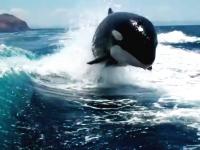 ボートを追うのがイルカじゃなくてシャチだった場合。これは怖いだろwww