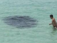 フロリダのビーチに現れた大きな影。に飛び込んで遊ぶ男性。投網りたいw