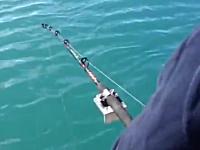 これは焦るわwww魚釣りでまさかの強敵に奪われてしまった動画。OMG