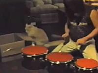 まさかのドラマー猫が現れるwww人間とニャンコのセッションがキタ―(゚∀゚)―!!