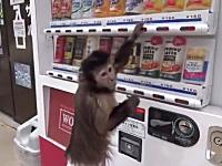 ボタン連打でワロタwww200円もらってジュースを購入しお釣り50円を返すサル。