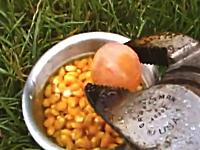 危険なポップコーンの作り方。真っ赤に熱した金属を投入してバチバチ調理