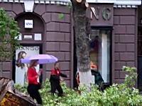 雑な作業。街路樹の切り倒しでギリギリ動画。ガードマンを雇ってよ・・・。