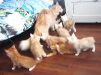 子猫たちの焦りっぷり。子供たちにカッコ悪い所をみられてしまったママン。