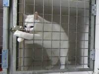 完全に鍵の構造を理解してゲージの内側からカギを開けて脱出する猫ちゃん。