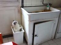 間抜けすぎるネコ。一度目は勘違いとして二度目は学習しろよww確認してんじゃん