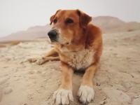 犬になった気持ちで見てください。海外には犬だけの為に作られた衛星放送番組があるらしい。