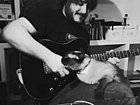 ギター演奏のビデオを撮りたいお兄さんVS相手をしてほしいニャンコ。しつこすぎw