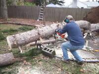 ちょっと笑ったキコリ動画。庭の木をチェーンソーで切断していたら面白ハプニングが。