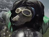 ワンコが空を飛ぶ!! ベースジャンプを強制させられるイヌw