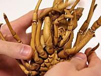 これは凄い。日本の天才がツゲを彫ってリアルすぎるエビちゃんを製作。芸術。