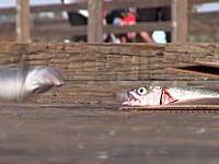 魚「うわああああああああ」なにこれちょっとだけ笑った17秒動画。なぜ作ったww