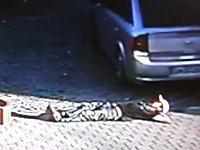 もしあなたが酔っ払って眠たくなったとしても駐車場でだけは寝てはいけないw