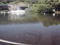 衝撃の瞬間。川に泳ぎにきていたら車が橋を突き破って落ちてきた