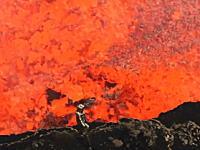 なんという恐ろしいビデオ。火口でボッコボコと湧き上がるマグマに極限まで近づいてみた。