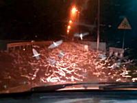 恐怖体験ww夜道でカゲロウの超大群と遭遇したらキモイ動画。