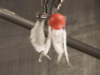空気抵抗のない真空の空間でボーリングの球と鳥の羽を同時に落としたら??