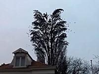 驚き度数★5つ。「この木には何羽の鳥がとまっているでしょうか」ウワァオ!ウィィィ!