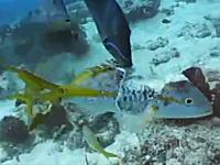 3割くらい食われて骨まで見えてるのにまだ諦めずに逃げ出そうとしている魚。ちょいグロ注意。
