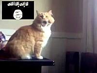なんだよこの動画wネット民たちがイスラム国のアッラーフ・アクバルで遊んでる。