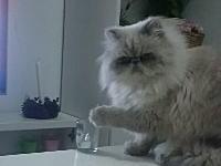 悪いネコ。飼い主の「やめて!やめて!」に反応したのにしれっと悪い事をする。