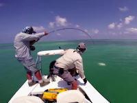 悲しい釣り人動画。アジ類の最大種GTがキタ――!!と思ったら
