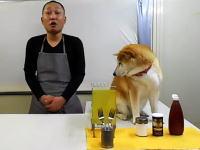 柴犬に邪魔されまくるクッキング動画がはてブで人気に。スーパー冷奴編。