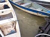 飢えたピラニアたちのいる川に生肉を投げ込んでみるとwこれは激しい・・・。